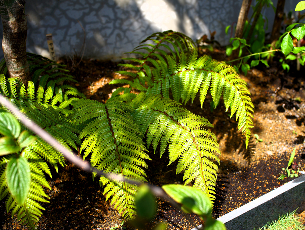限られた空間で四季を感じる雑木の庭