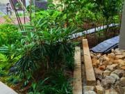 マンションの庭づくり2015、、、